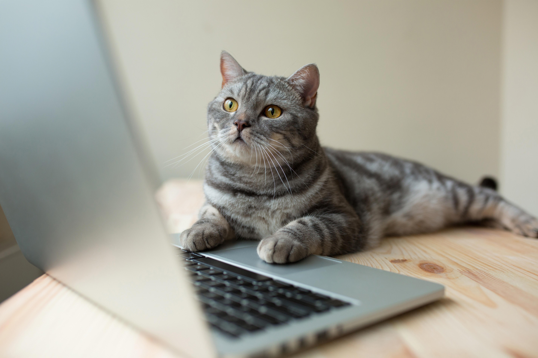 Cat at computer
